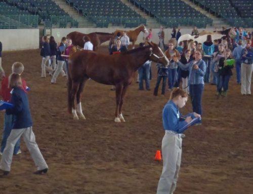 4-H Horse Program