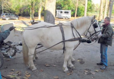 American Creme Draft Horse