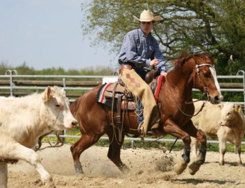 Cutting  – Rodeo Horse Sport