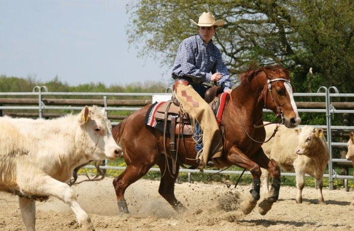 Cutting – Rodeo Horse Sport