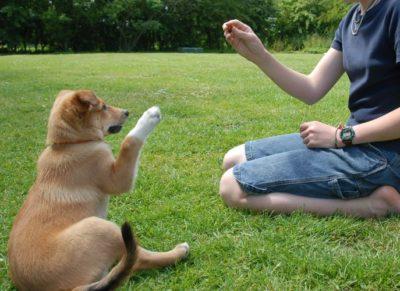 Dog Training & Behaviour