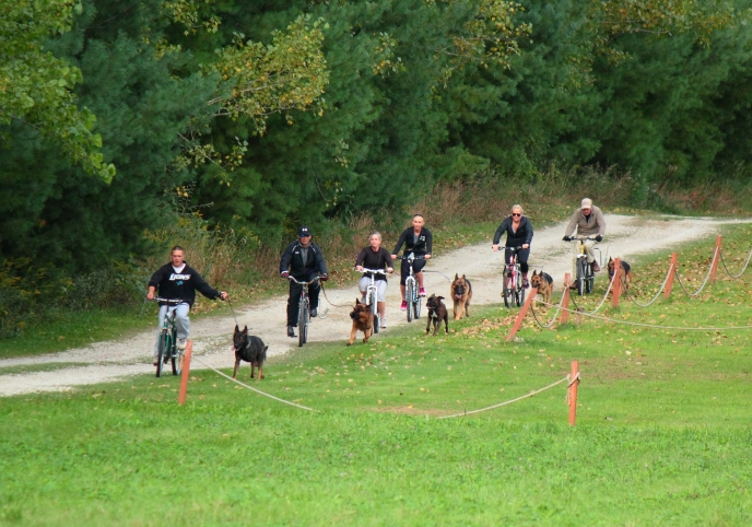 Endurance Test for Dogs