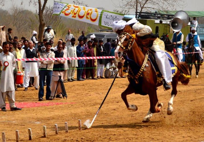 Equestrian Tent Pegging