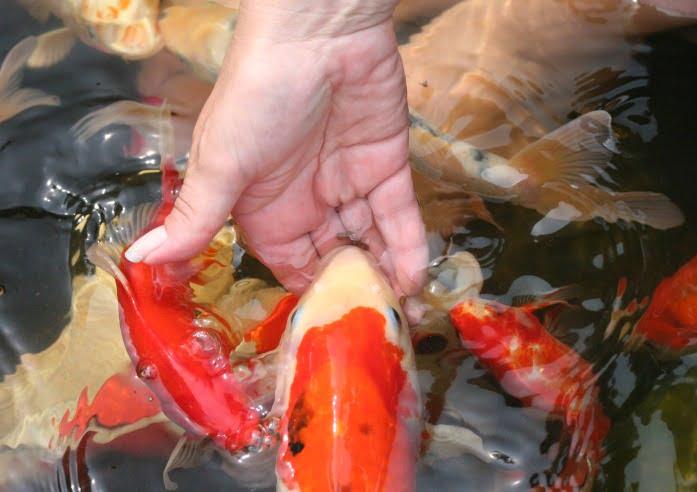Feeding your Fish