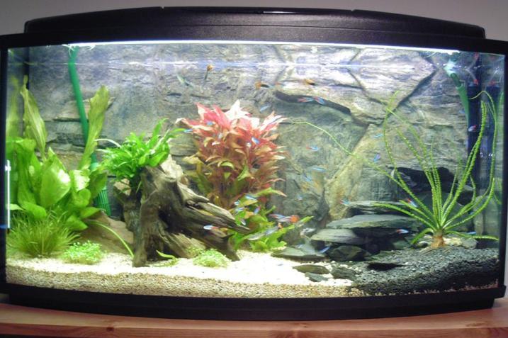 Fish Tank Water Quality in a New Aquarium