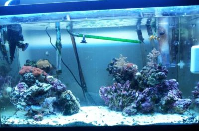 Fish Tanks Lighting – A Bright Idea?
