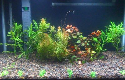 General Maintenance Of Your Fish Tank