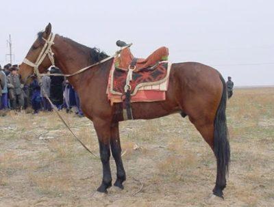 Karabair Horse