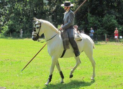 Lipizzan horses