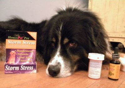 Love Your Pets?… Then Why Use Chemicals On Them?
