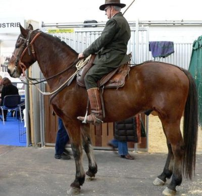 Maremmana Horse