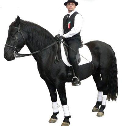 Murgese Horse