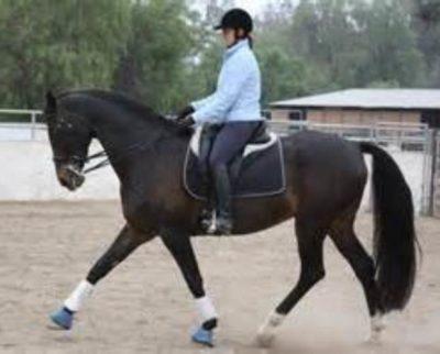 Nonius and Furioso Horses