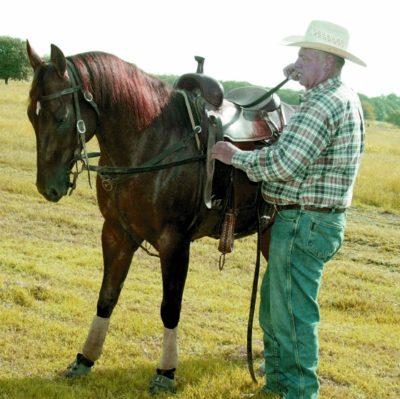 Novokirghiz Horse