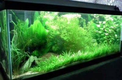 Other Aspects of Fish Tank Water Management