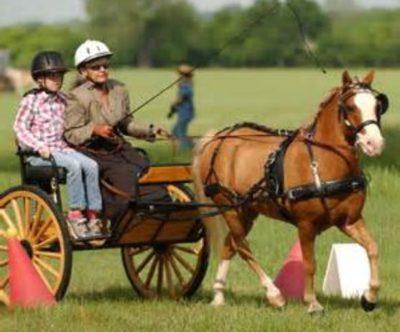 Para-Equestrianism