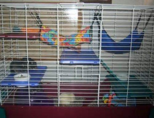 Pet Rat Cages