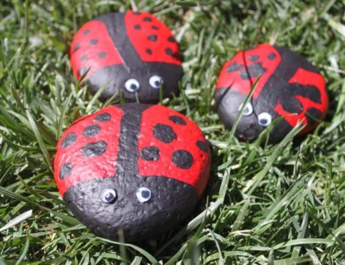 Pet Rocks – what we can learn from them.
