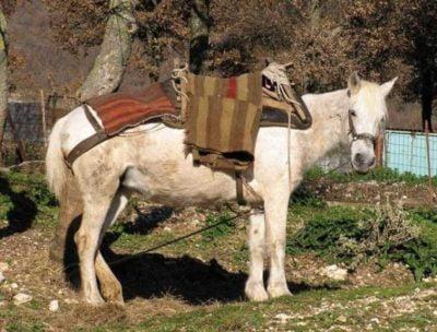 Pindos Pony