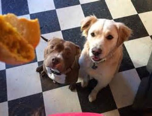 Rewarding your dog and the psychology of treats