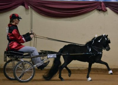 Roadster Horse Showing