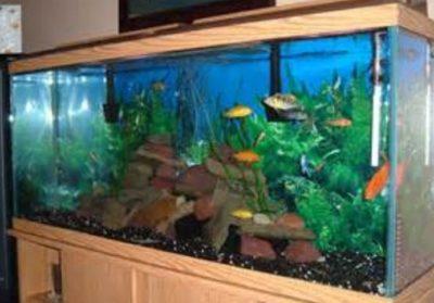 Setting Up An Aquarium