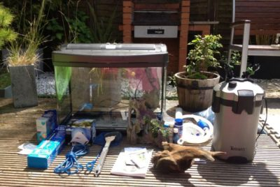 So you want to buy some fishes and set up an aquarium