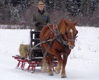 Suffolk Draft Horse