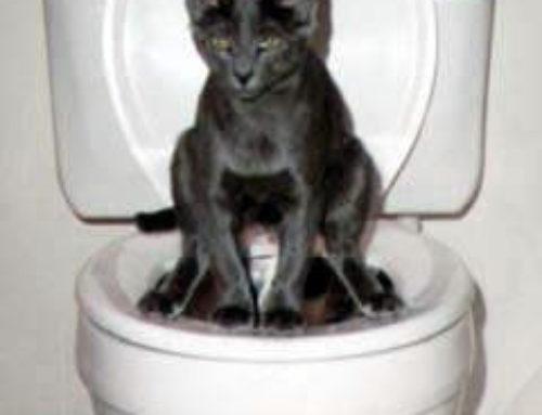 Litter-training your kitten