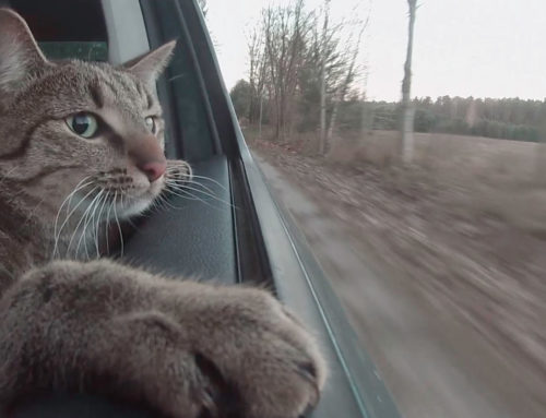Cats and Travel