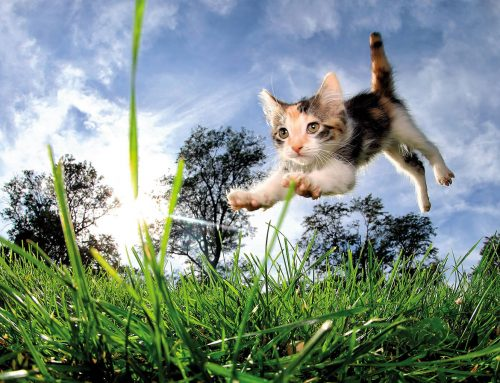 Cat's jumping and landing Ability