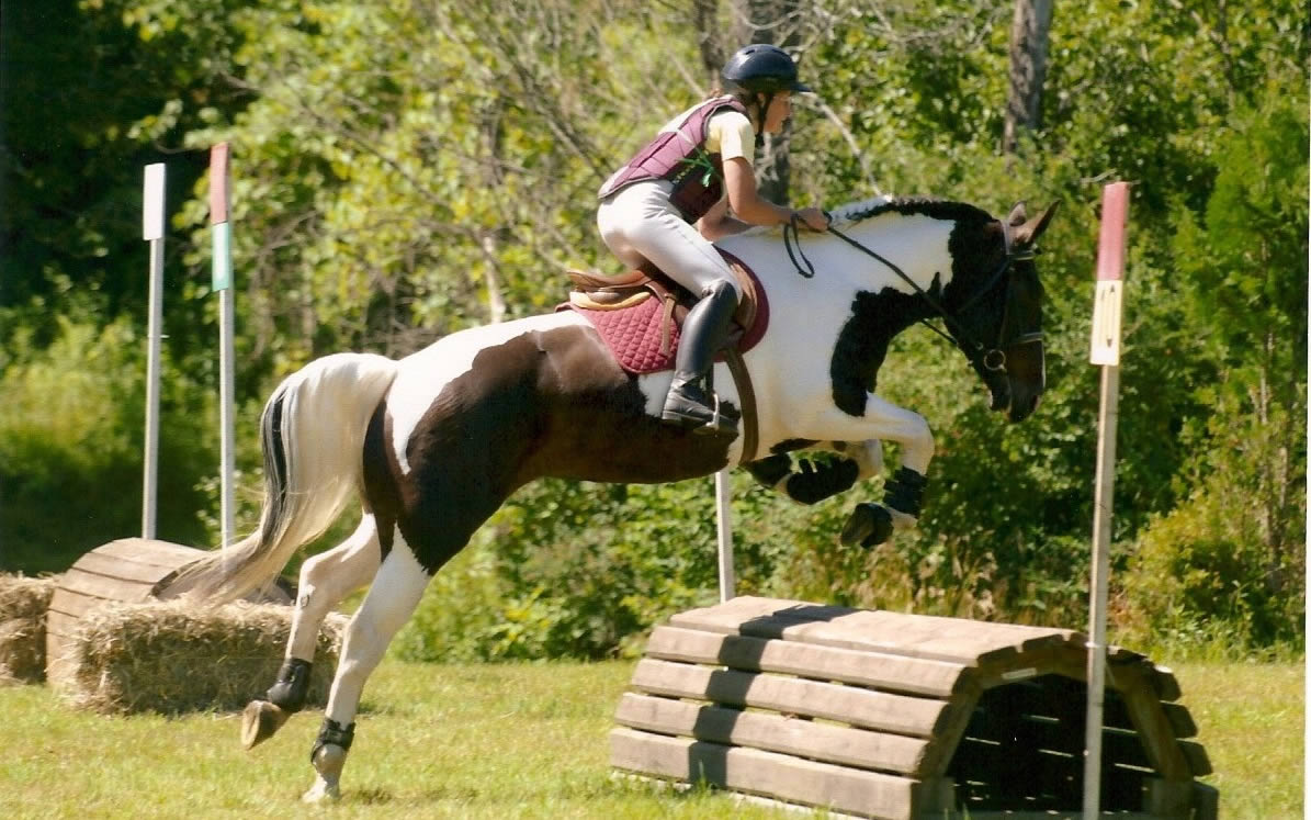 Horse sports – man and beast competing together