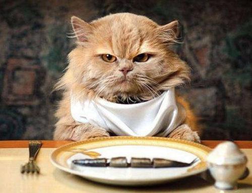 Feline Digestive system