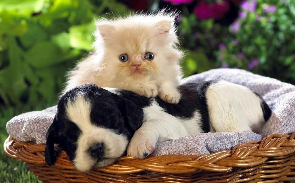 Why Do Cats Make Good Pets Pets Australia
