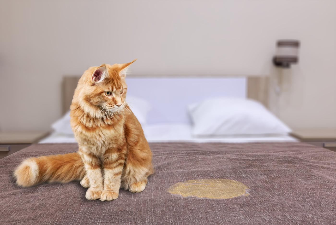 Cat Wee