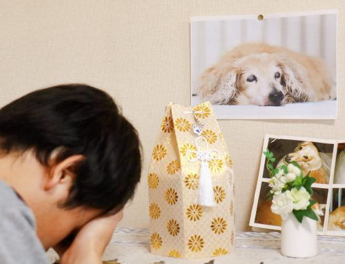 Consoling Someone Who Has Lost A Pet