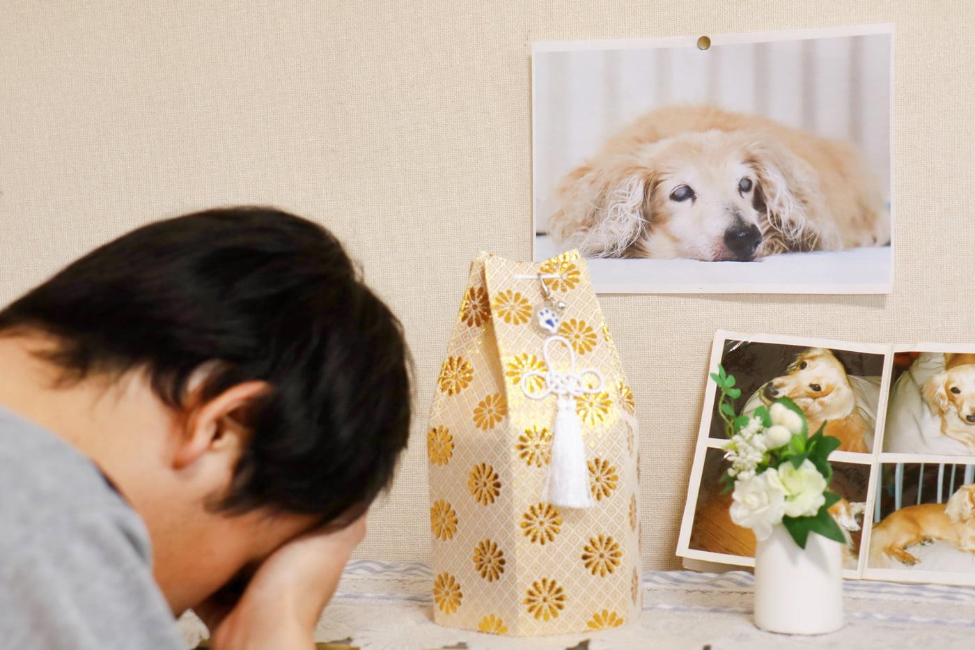 Dead Pet Dog