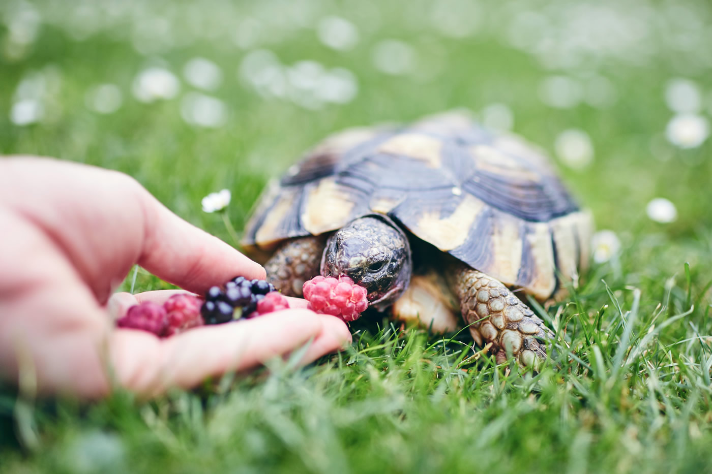 Feeding your turtle